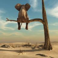 Sock my Feet - ELEPHANT